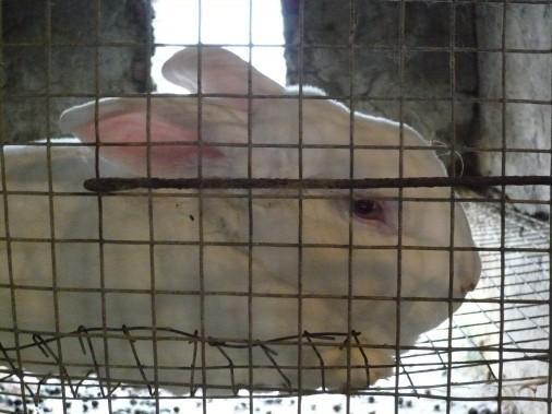 China-Rabbit-Fur-Farming-Investigation-23-506x379