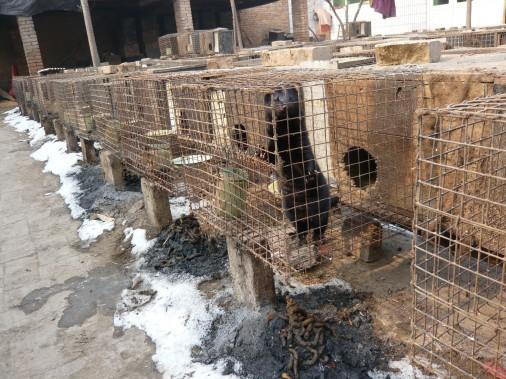 Ferret-Farm-Baoding-City-Feb-16-Female-ferret-2-506x379
