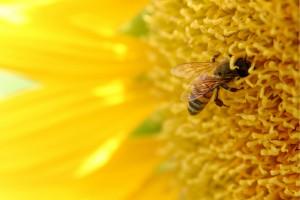 Honey-300x200