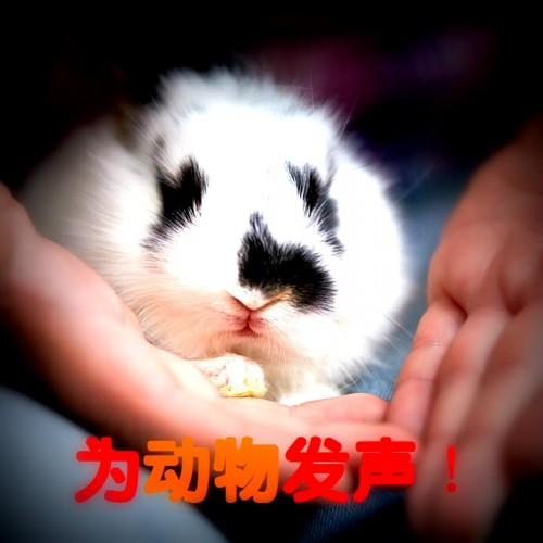 Baby Rabbit on Hands