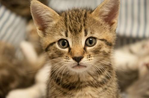 abandoned-kittens-3