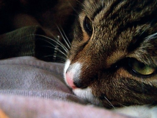 declawing-5-cat-sad