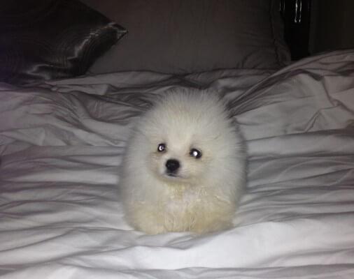 Shon-Puppy-506x400