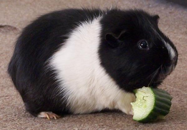 宝贝,我是100%的纯素食者,我拒绝动物实验!