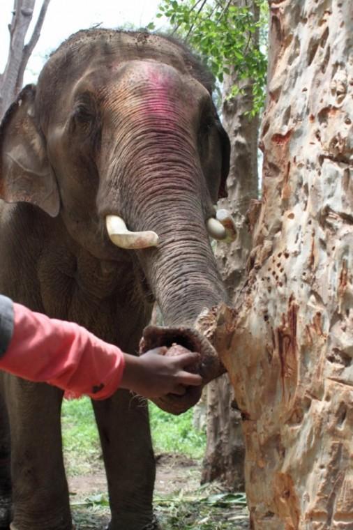 Sunder从其中一名看护人手中取过椰子