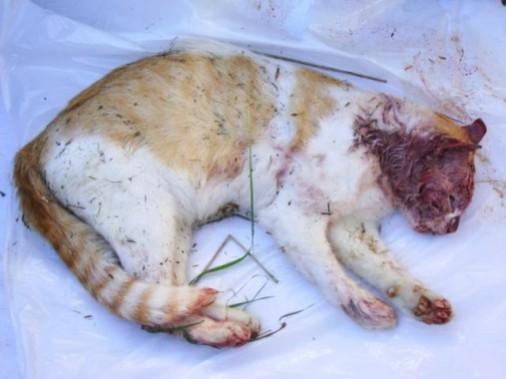 PETA_investigation_kitten_season