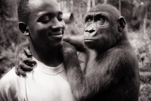 Theirry-Gorilla-holding