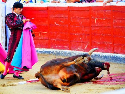 bc-bullfighting-wp-thumb