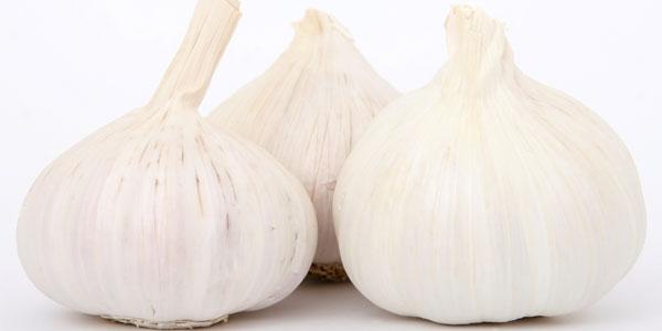 garlic-freeimages