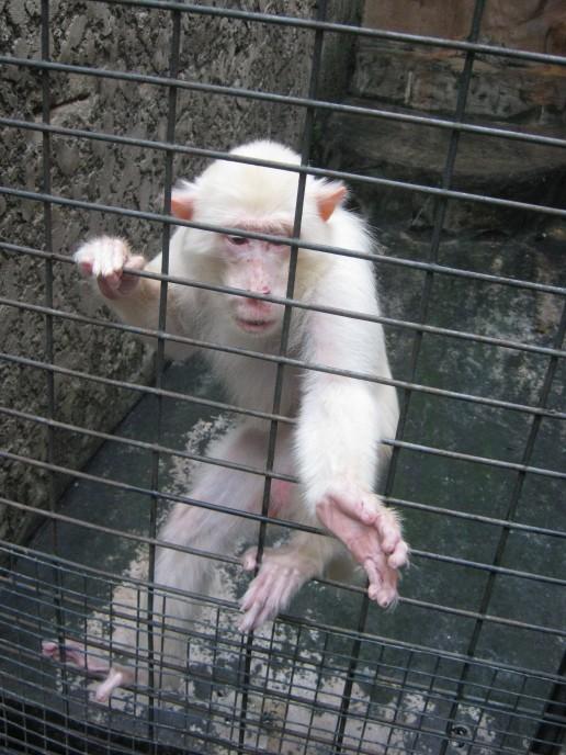 Pata Zoo, October 24, 2011 (41)