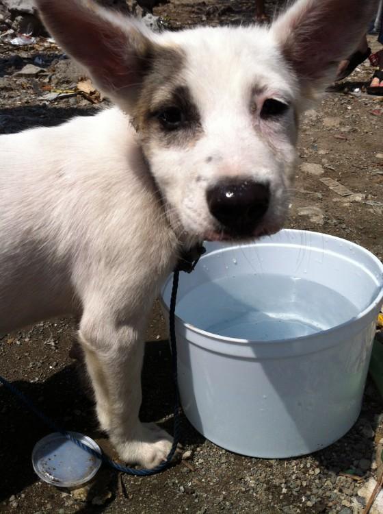 Pasay Pups, April 2013 (6)