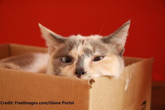 lua-in-the-box-1353143