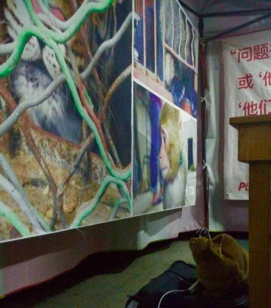 Nanjing Forestry University 102815 (1)