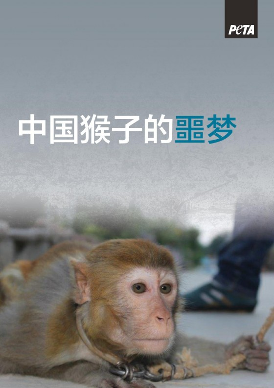 Suzhou Circus Monkey Report_Chinese_A4_300-page-001