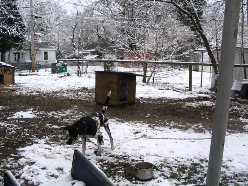 chained dog in the snow