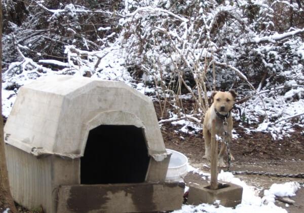 紧急!PETA敬告狗主人:狗狗会在寒潮中死去