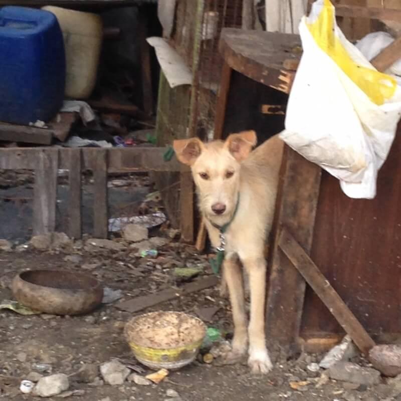 Pasay Pups, December 2014 (40)