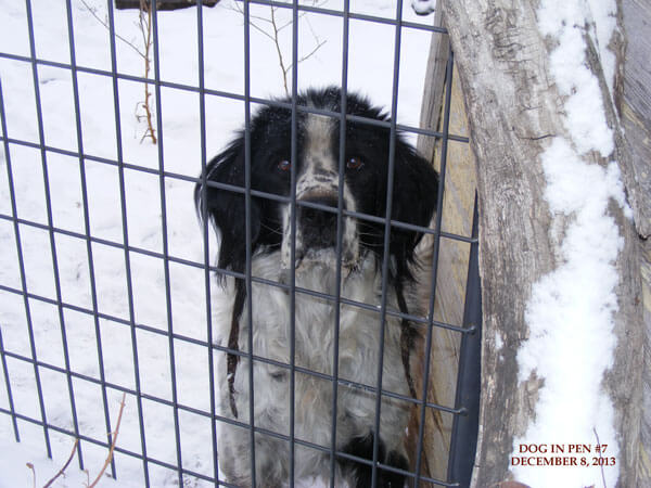 Sad, shaggy, black and white dog left outside in the cold and snow. The dog has icicles hanging from his/her mouth.