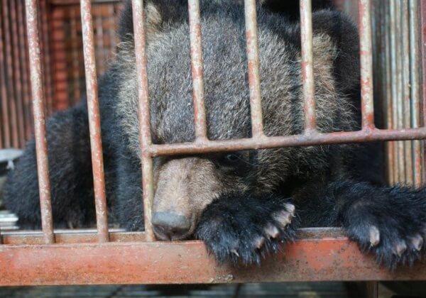 昆凌支持PETA为小熊发声,讲述马戏团幕后的残忍