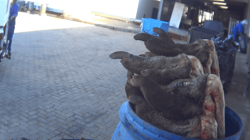 当工人正将鸵鸟尸体挖空好卖鸵鸟肉时,调查员看到鸵鸟的心脏、肺脏悬挂在空中,并且有一垃圾桶装满鸵鸟脚,放置在处理区域外。
