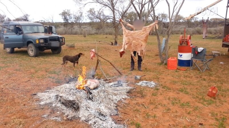 """A worker tossed the sheep's skin onto a fire while another worker joked, """"That was my robe, cunt."""""""