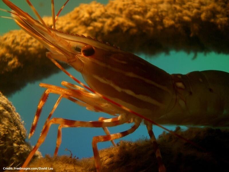 shrimp-1485183-1280x960