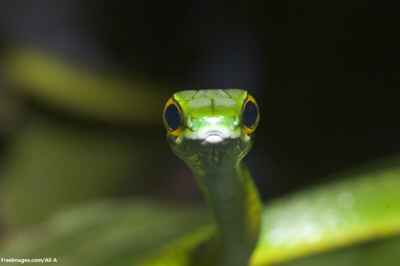 green-snake-1561113-1279x852