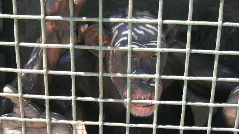 Zoos Are Prisons.mp4_20160706_112801.918