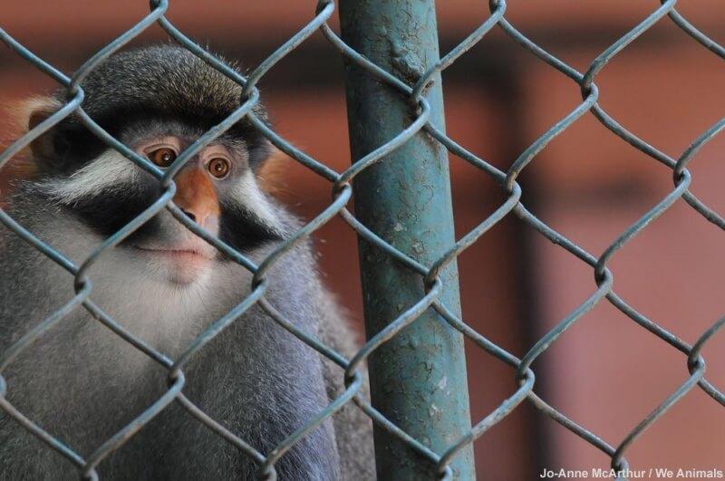 monkey-at-zoo
