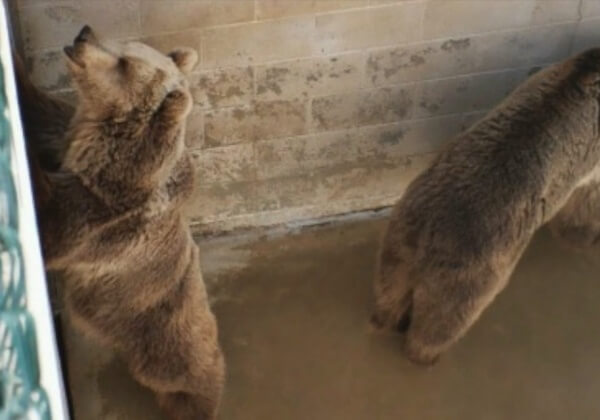 看完这1分钟,您还会带孩子去动物园吗?