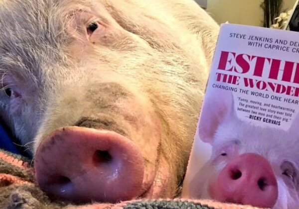 这位坐拥70万粉丝的猪小妹终于出书了