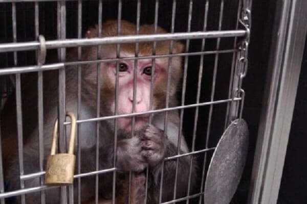 """动物不是""""货物"""": 9个你能帮助他们的方法"""