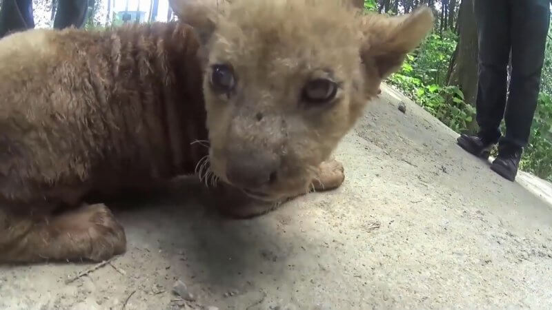 animals-in-the-circus-hit-bullied-chained-and-deprived-mp4_20160913_185754-810