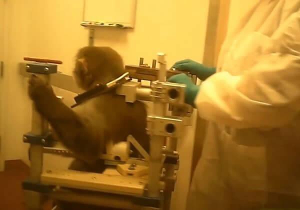 透视内幕:  大学实验室里的受害者