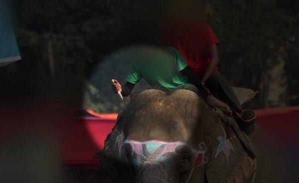 尼泊尔奇旺大象节:以保护大象之名,一边嗨翻,一边虐象