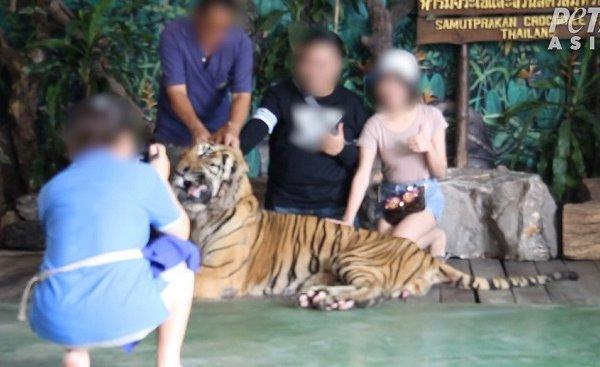 泰国北榄鳄鱼湖动物园背后的悲伤代价
