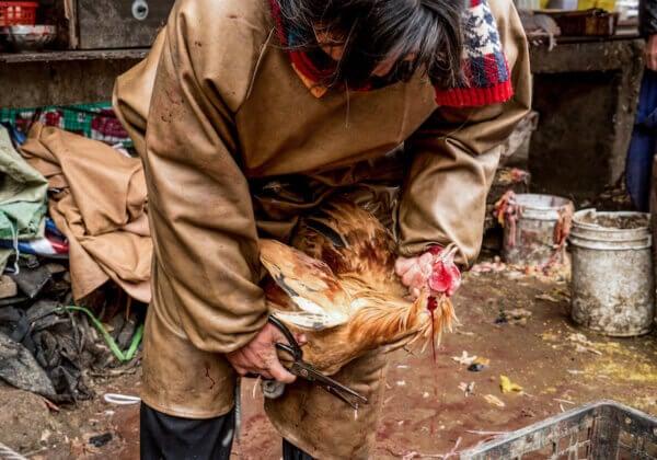 緊急!請呼籲關WHO閉活體動物交易市場 阻止致命病菌繁殖傳播